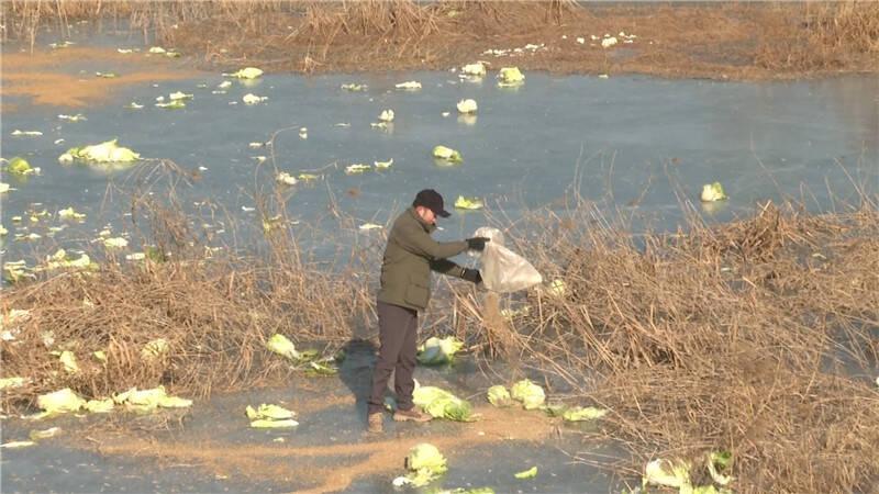 62秒|河流冰封鸟类觅食成难题 志愿者投喂助鸟儿过寒冬