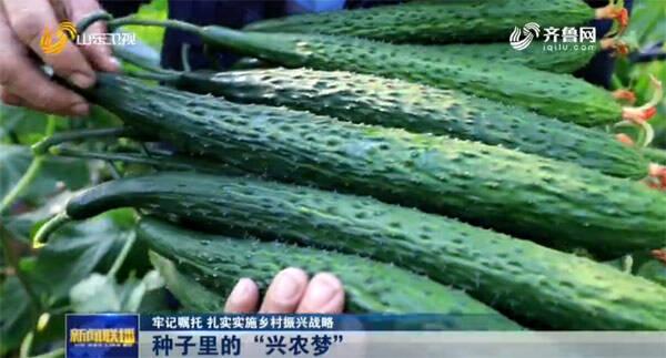【牢记嘱托 扎实实施乡村振兴战略】临沂市沂南县聚焦新品种研发 黄瓜产业实现高质量发展