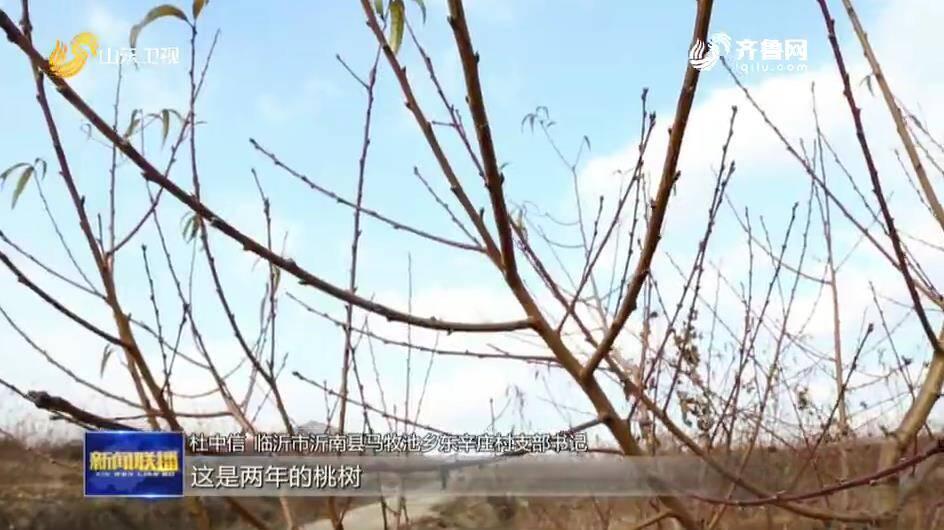"""【强基 引领 振兴——""""莱西会议""""再出发】沂南:党建统领片区提升 打造乡村振兴示范区"""