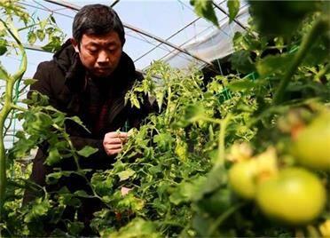 盖棉被、巧用增温机…暴雪过后,威海张村镇农技专家深入田间送妙招