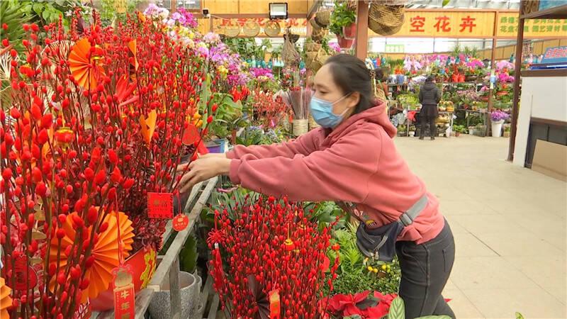 59秒|蝴蝶兰、红掌、杜鹃、仙客来争奇斗艳花香四溢 青岛春节花市年味渐浓