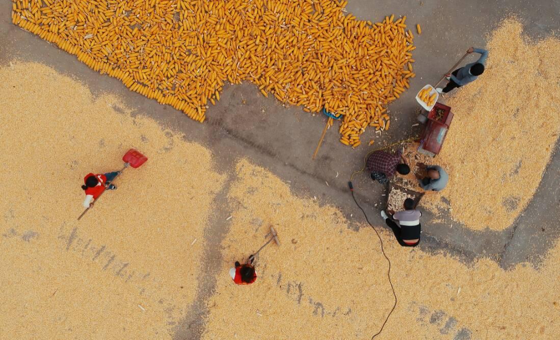 闪电深1度|山东省委农村工作会议缘何把这项工作定为2021年农业工作头等大事
