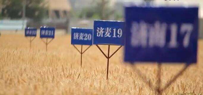 【牢记嘱托 走在前列 全面开创】山东:打好种业翻身仗 建设现代化种业强省