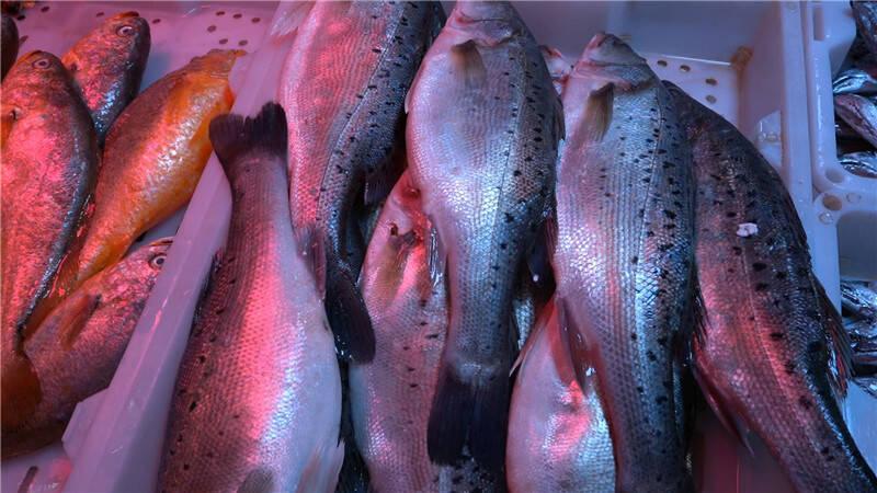 54秒|量大 价实 货全 味鲜…… 带您逛逛青岛腊月里的海鲜市场