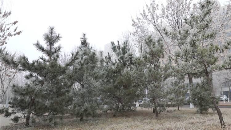 53秒丨凝霜挂雪玉树琼枝犹若仙境 东营利津现雾凇美景