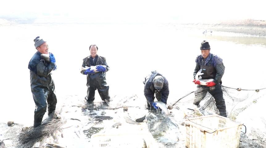 37秒 | 出鱼啦!枣庄峄城渔民一网下去20000斤鱼上岸