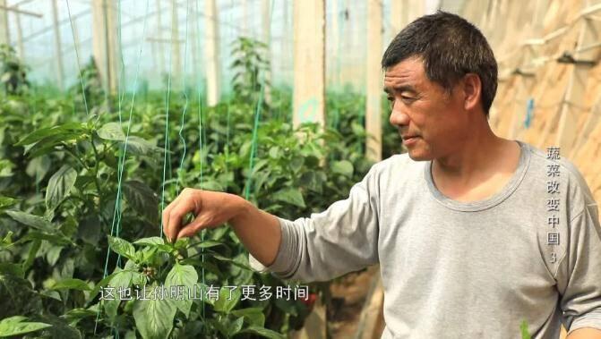 给农业插上科技的翅膀!山东卫视今 晚播出《蔬菜改变中国》第三集《多彩硅谷》