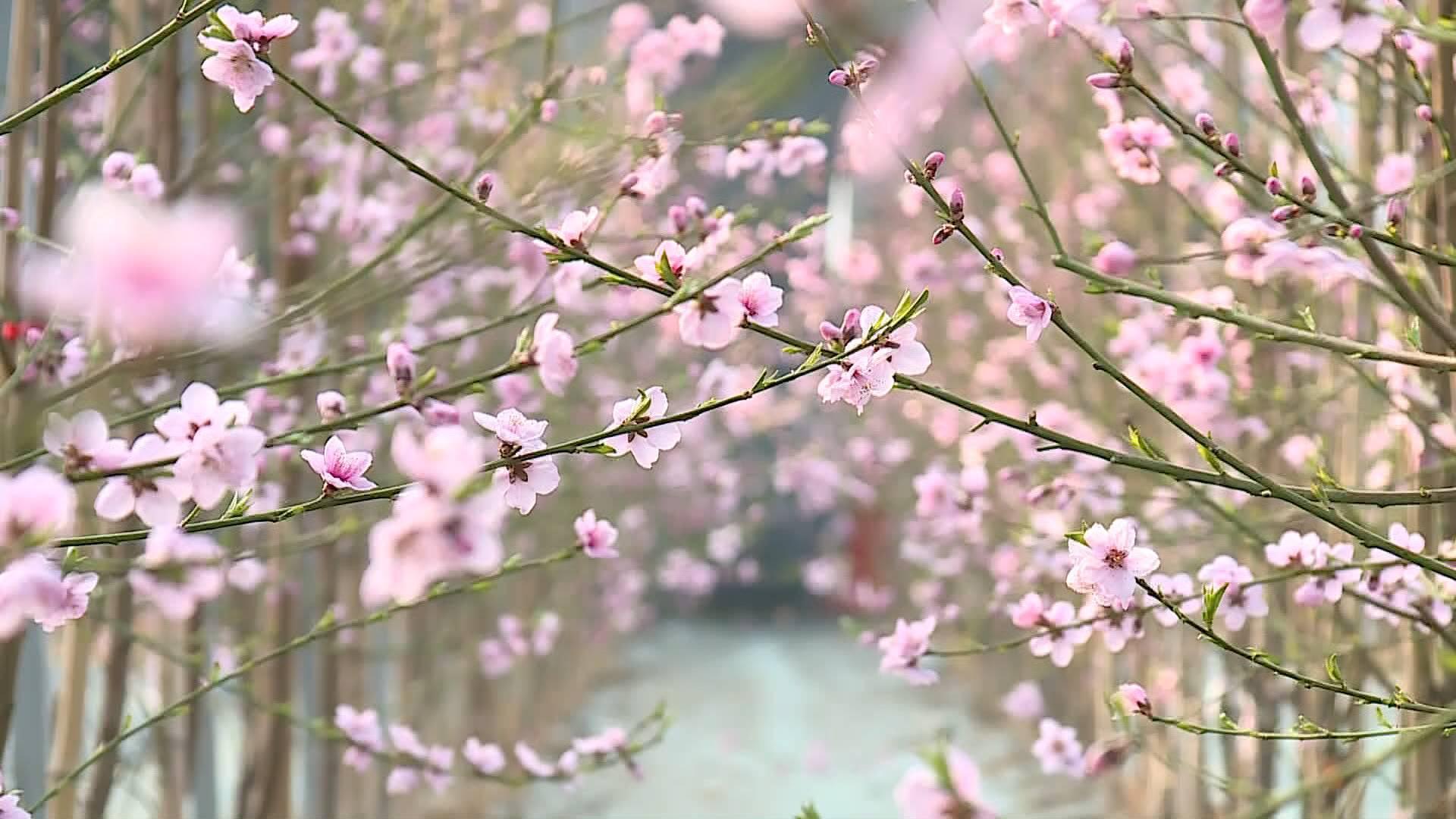 71秒丨新春伊始花木萌动 齐鲁春色美不胜收