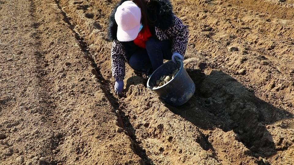 44秒丨土豆带来致富新途径 邹城市看庄镇春来土豆种植忙