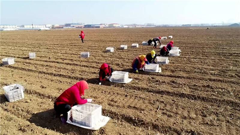 142秒|不负春光备耕忙 青岛十万亩马铃薯开始播种