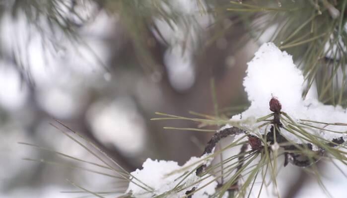 86秒|春雪满空来 处处似花开 济南钢城区2021年第一场春雪来了