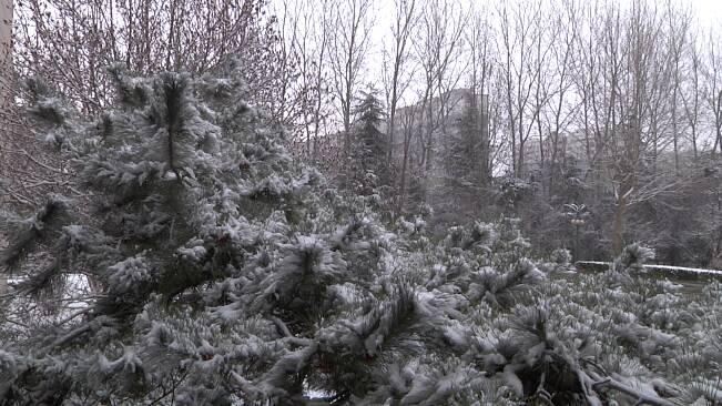 """35秒丨局地降雪量超10毫米!潍坊临朐、安丘、诸城等地迎来""""瑞雪"""""""