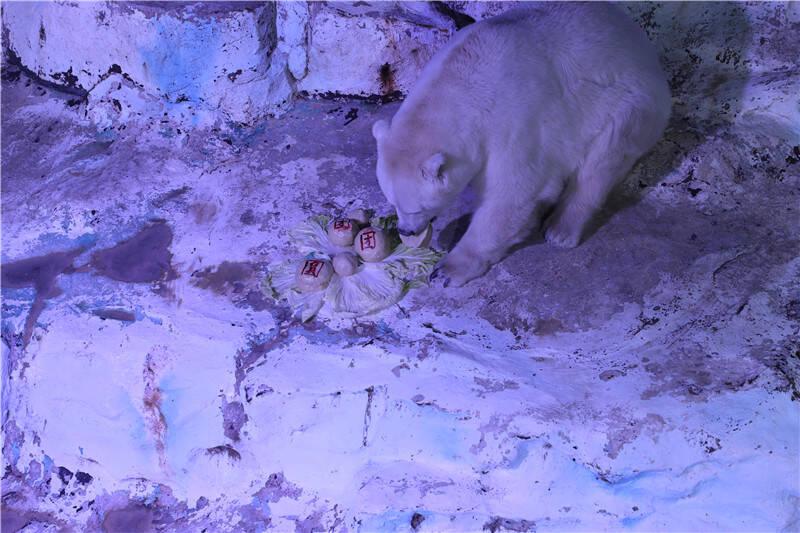 75秒|动物闹元宵 北极熊吃8.8斤巨型元宵庆团圆