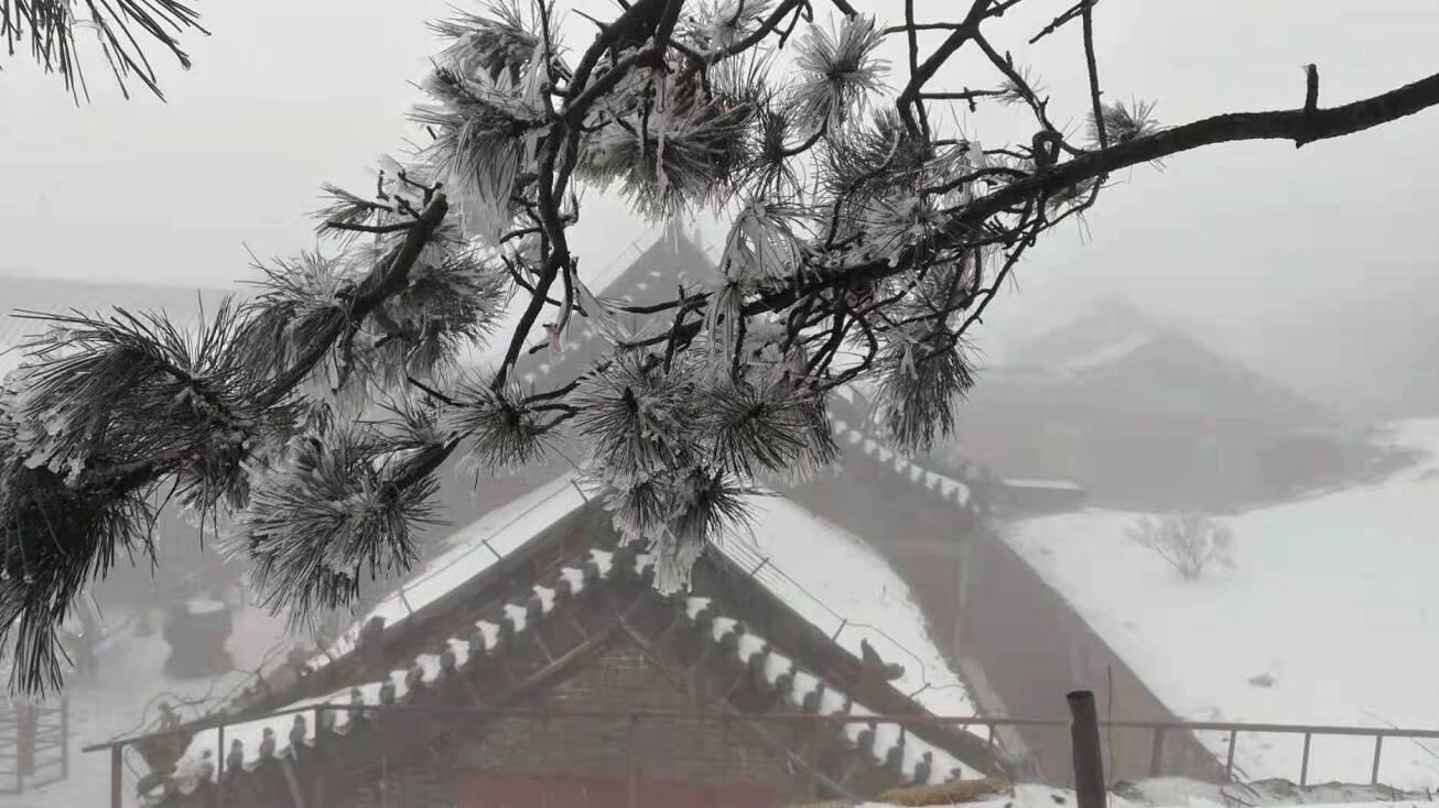 组图丨一场雪,让山东这些城市美成童话!各地雪景美图来袭