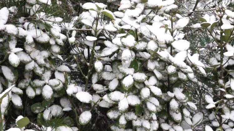 49秒 潍坊寒潮来袭 风雪降温齐登场