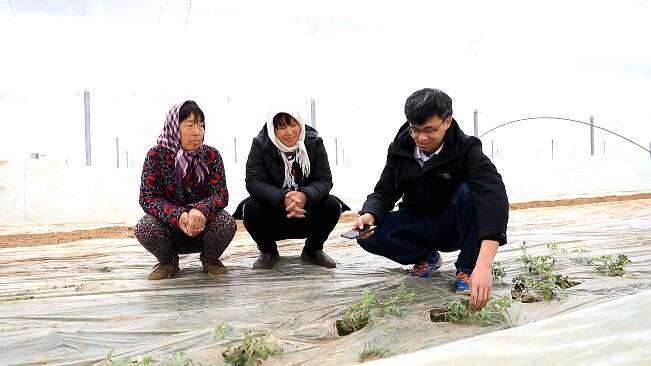 67秒丨阴天、雨雪接踵而至 潍坊昌乐农技专家为种植户支妙招