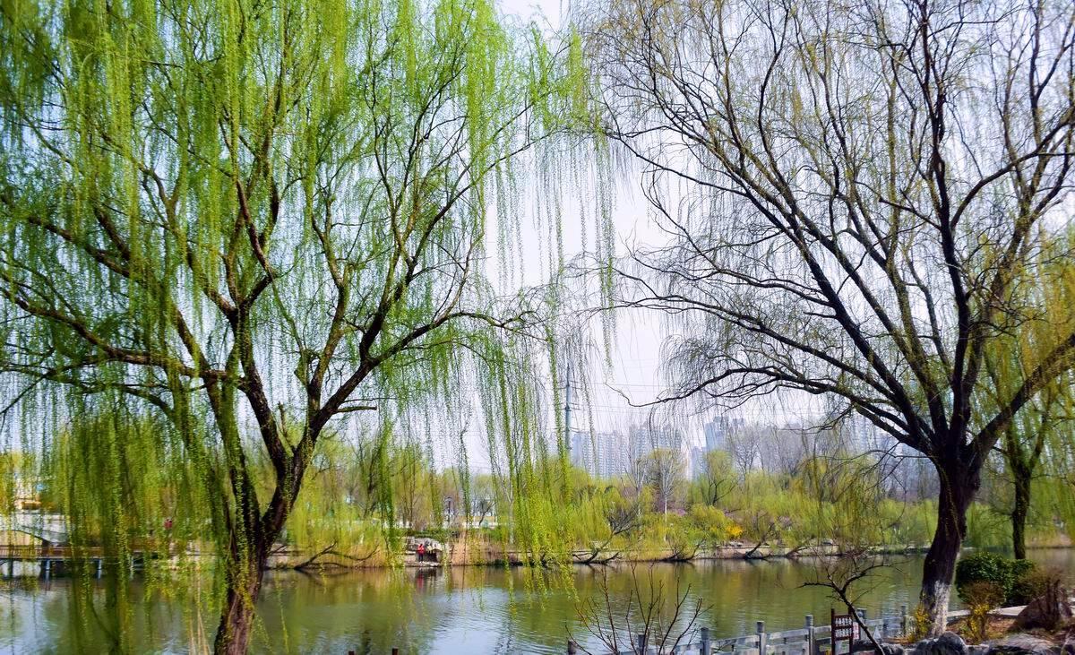 诗画山东|春风又绿清河畔!俯瞰济南小清河清新画卷