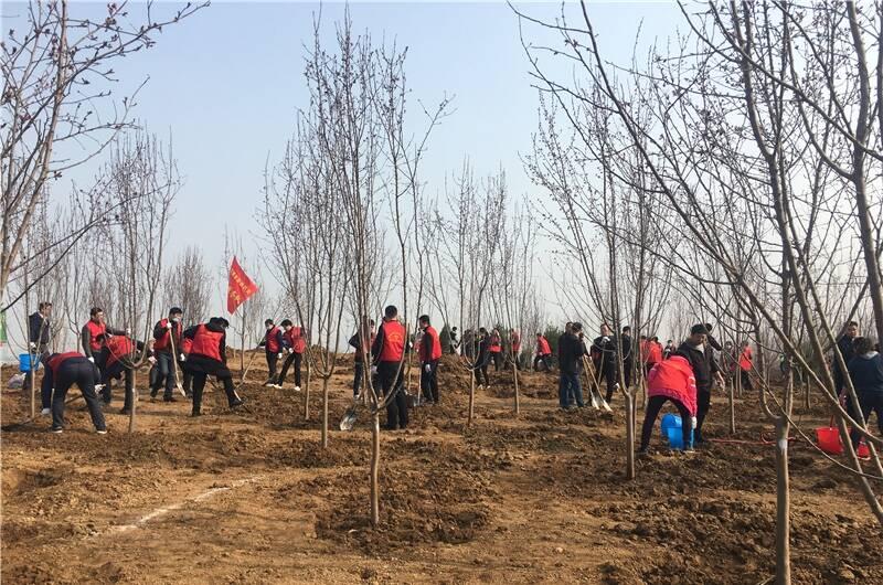 植树造林 全域增绿!淄博市各大班子领导同志参加义务植树活动