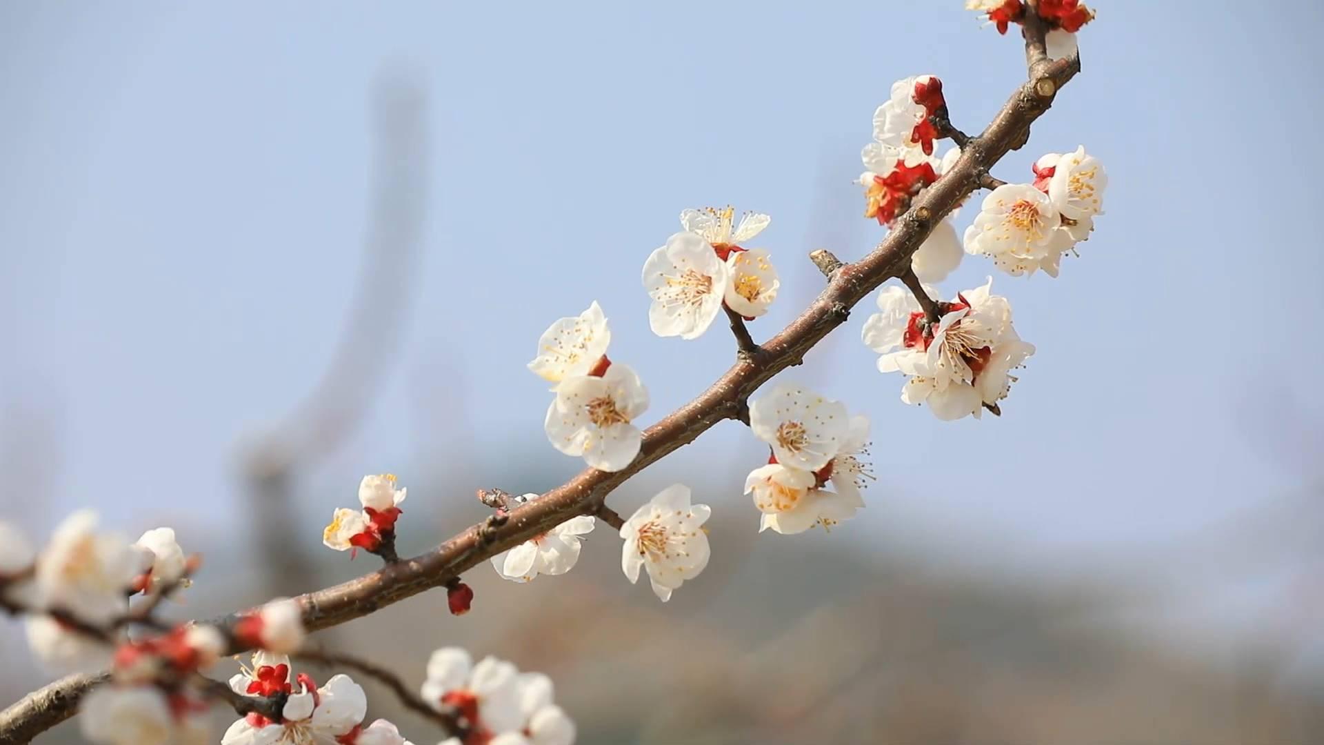 拥抱春天丨三月春风暖 临沂万亩杏花惹人醉