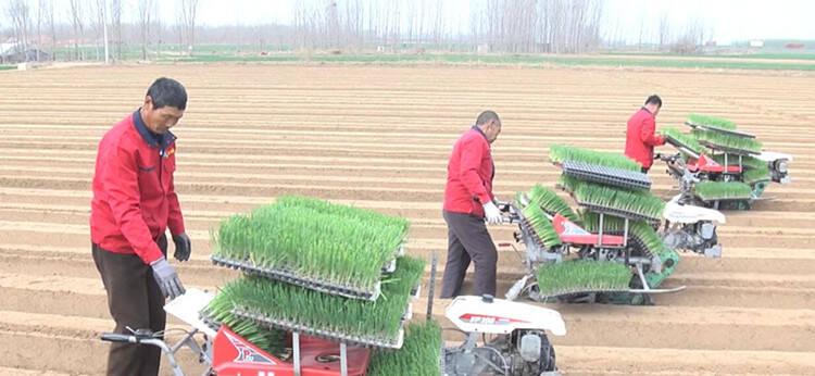 63秒|潍坊安丘:科技赋能春耕春播 4台机器一上午完成30亩大葱移栽