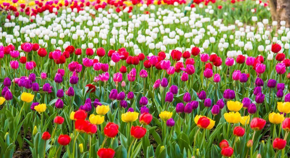 @青岛人 请接收!青岛地铁最全赏花攻略在这里