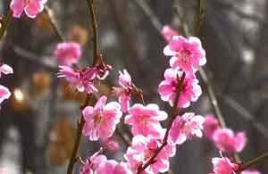 44秒|莫负好春光!来淄博感受三月的暖意和花海