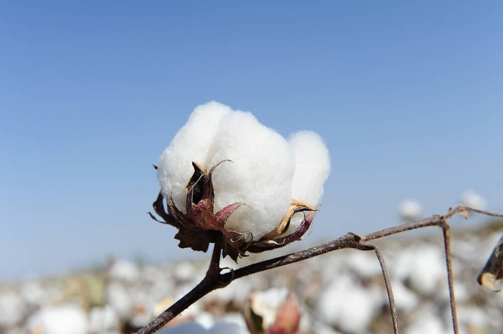 新疆棉花不容抹黑 辱华品牌注定凉凉丨闪电头评