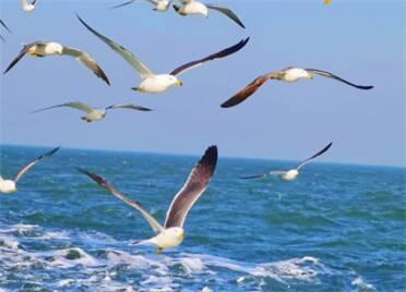 35秒丨春暖花開,到威海榮成奔赴一場藍色大海的尋鷗之旅