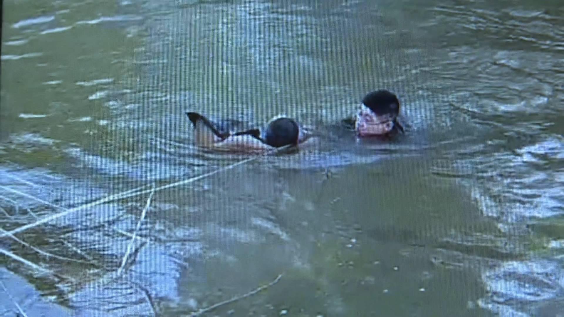 了不起的山东人丨鞋顾不上脱就跳进水里 菏泽巨野一村民勇救落水儿童