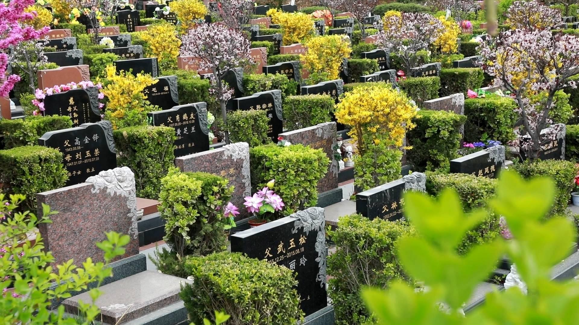 141秒|海葬、树葬、壁葬、草坪葬…淄博推行绿色殡葬让逝者回归自然