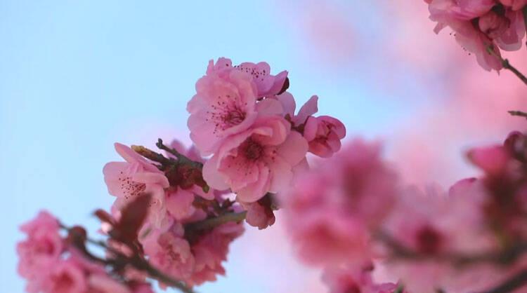 53秒|潍坊滨海:繁花锦簇 春意渐浓