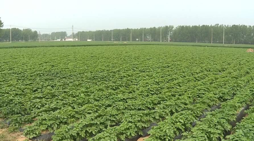 49秒|滕州全面完成7.33万公顷承包地确权颁证