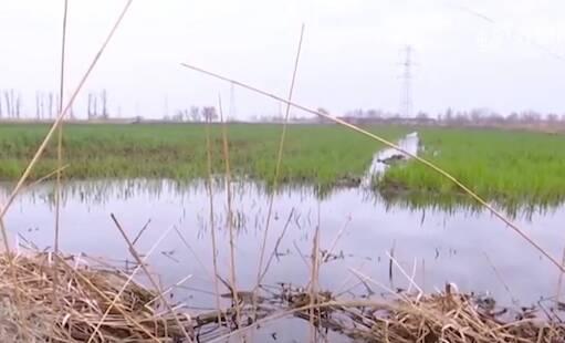"""青岛莱西这个村的旱地突然变""""水田"""" 大水究竟从哪来?"""