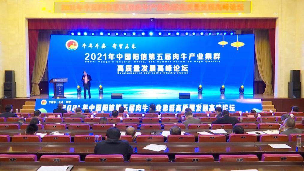 40秒|滨州阳信举办第五届肉牛产业集群高质量发展高峰论坛