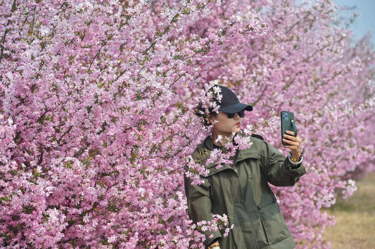向往的生活!71秒航拍带您领略济南新市花谷的田园春色