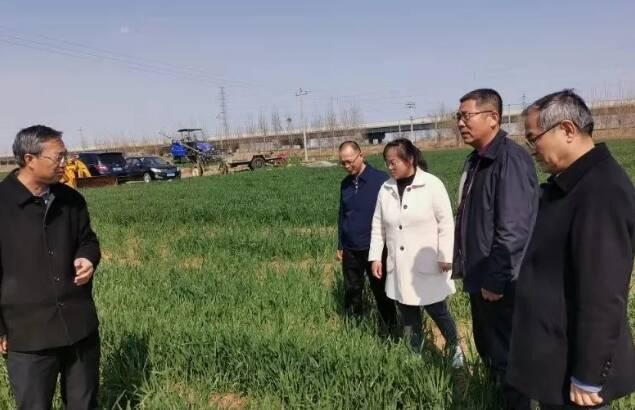 52秒丨465万元防治资金到位!潍坊全面启动小麦条锈病防控工作