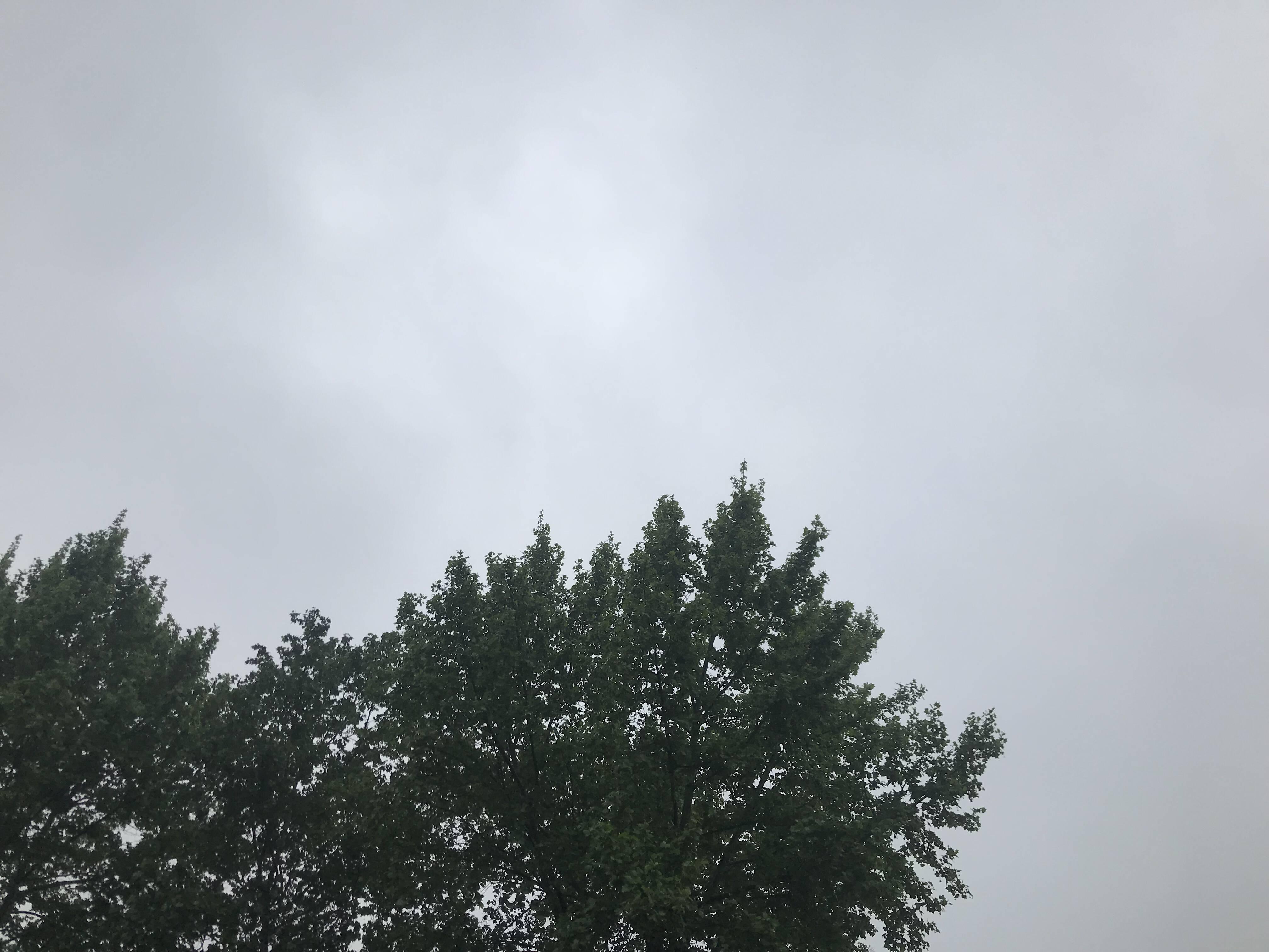 """风大、气温高!山东""""五一""""期间天气晴好,4日中东部有雷阵雨"""