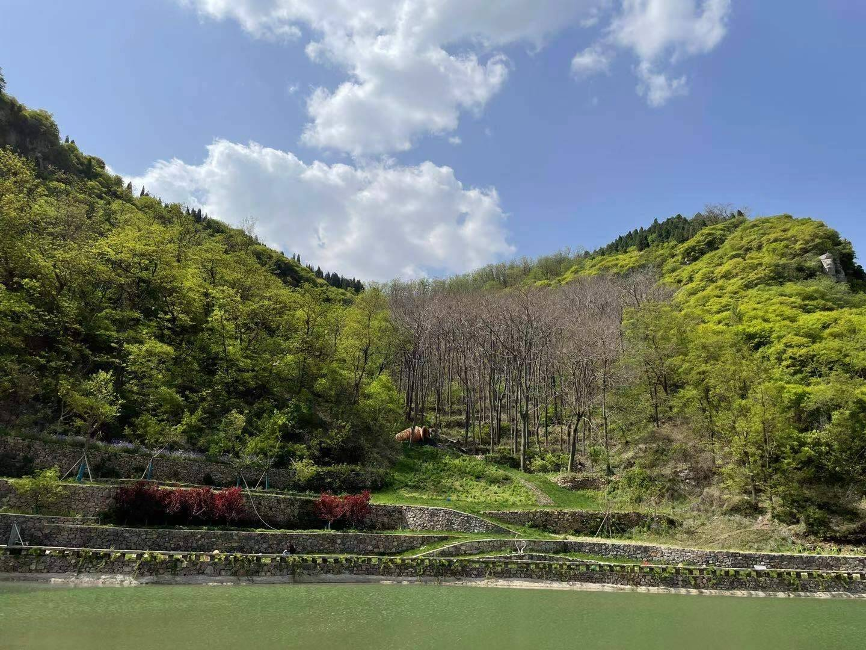 中国水墨画院博山写生基地、曾先国工作室共同落户红叶柿岩旅游区