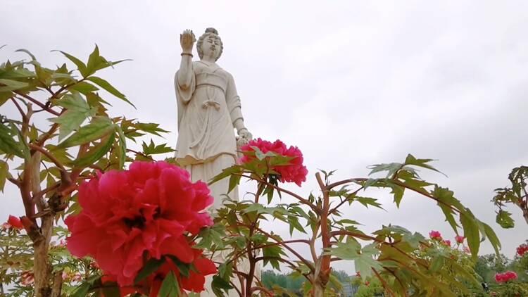 诗画山东|五一假期去哪儿玩?聊城东阿艾山牡丹花开正盛