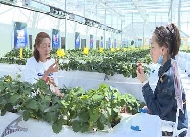 39秒丨五一近郊游受熱捧,一起看威海南海新區現代農業科技園區里的假日時光