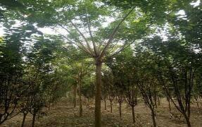 """禁伐古树名木!山东""""十四五""""期间年森林采伐限额504万立方米"""