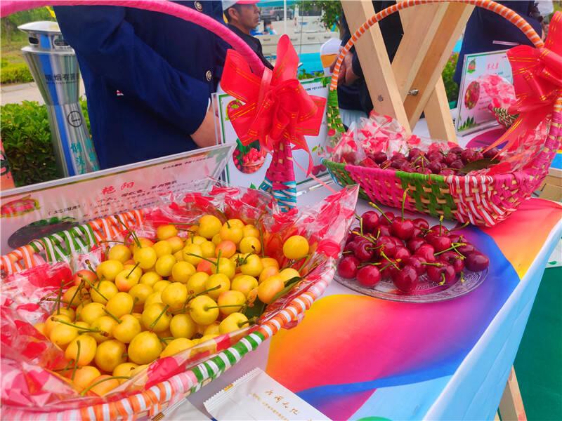 视频 | 点亮水果原产地 第二届中国大樱桃产业文化节暨首届青岛缤纷水果节在平度开幕