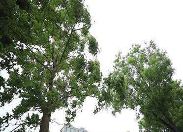 视频丨晚上少出门!山东多地已出现8级北风,济南今夜风雨交加,还要降温6℃