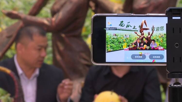 聊城莘县20万亩西瓜正丰收 一年一度西瓜节举行