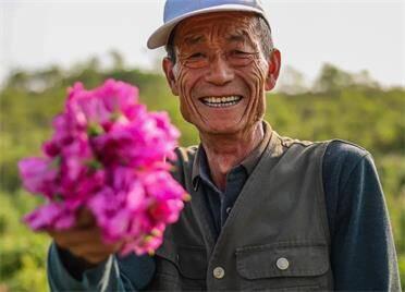 組圖丨隔著屏幕聞到了花香!榮成市夏莊鎮石硼丁家村百畝玫瑰盛開