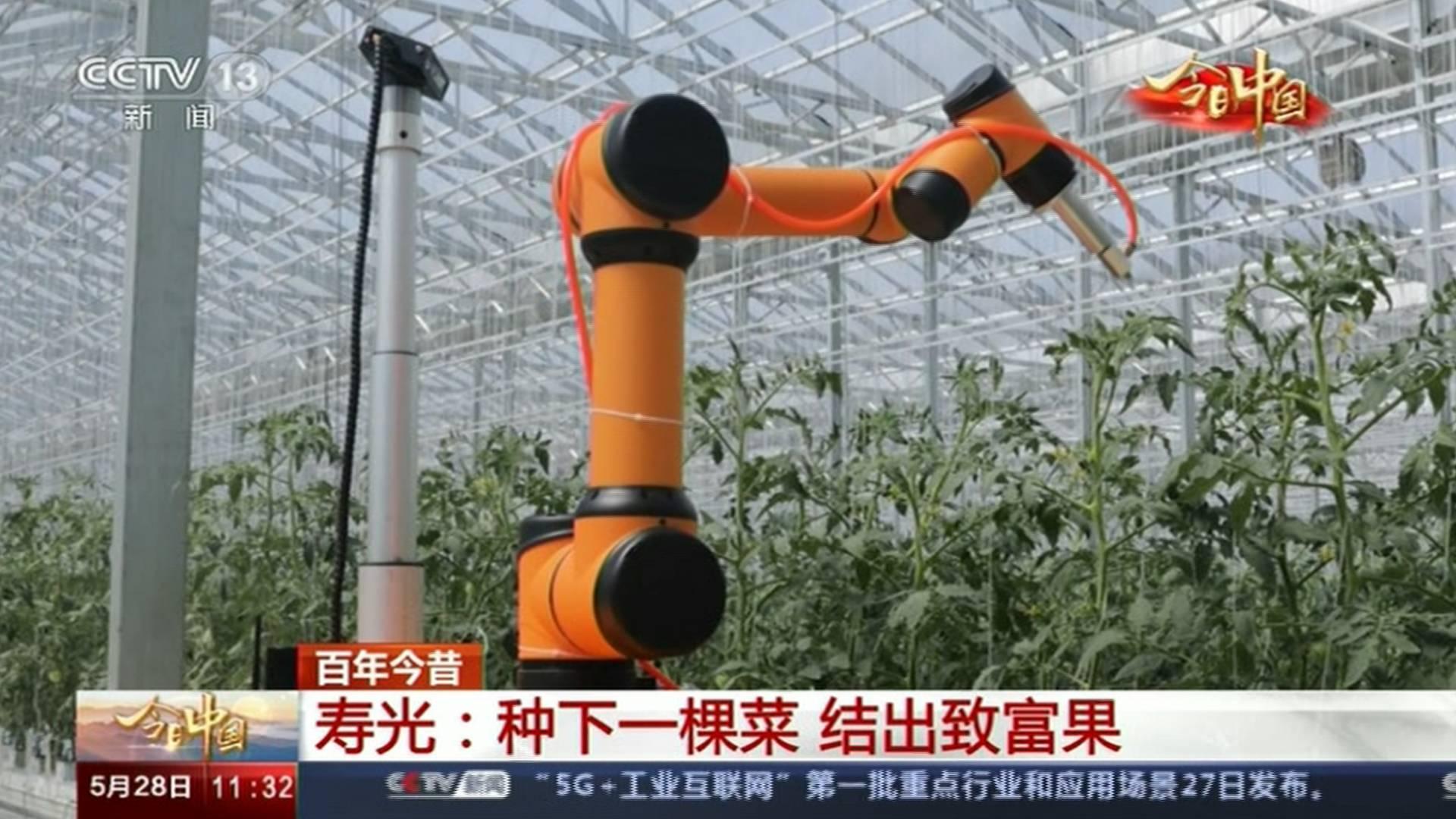 """今日中国·山东篇丨打造蔬菜""""硅谷"""",种菜结出致富果!这里是""""中国蔬菜之乡""""山东寿光"""