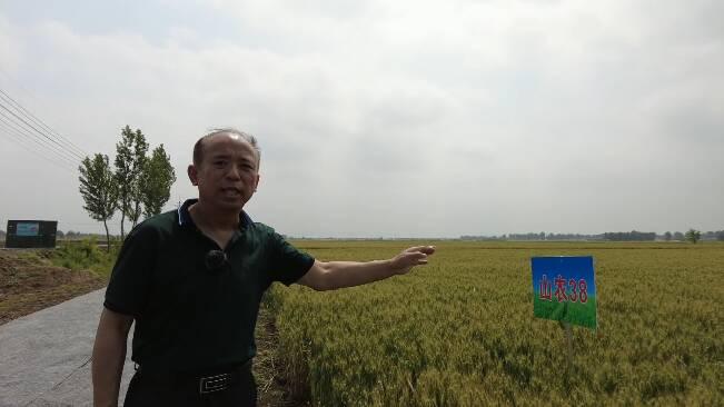 15种茎基腐病防治实验成果一起呈现!潍坊植保专家田间传授小麦病虫害防治知识
