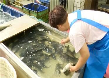 寿光:鱼比猪肉贵 淡水活鱼价格疯涨