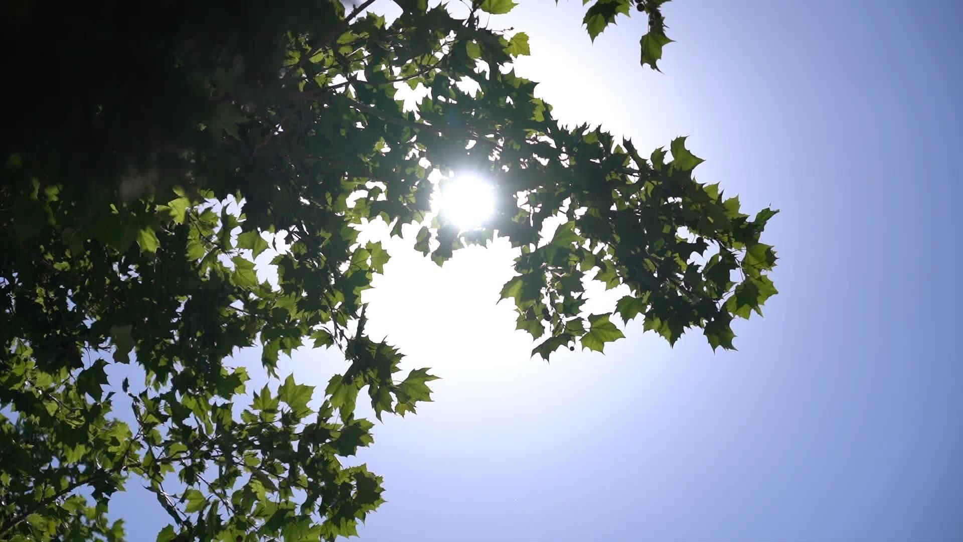 连热四天!济南发布高温黄色预警,局地可达37℃,中暑气象等级高