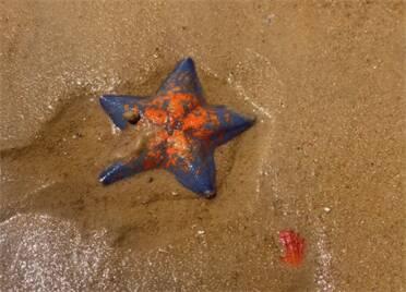 吹海風、賞海景、趕小海!仲夏來威海盡享大自然饋贈的樂趣